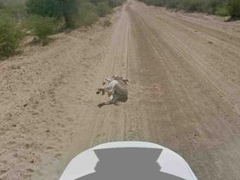 Шелдон Купер обвинил Google в убийстве осла